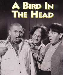 A Bird in the Head