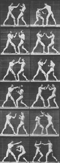 Кошачий бокс 1894  фильмы